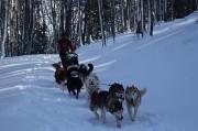 l équipage de chiens de traineau à Toulouse