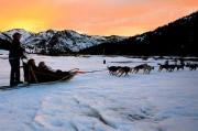 coucher de soleil avec balade chien de traineau