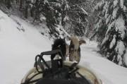 un attelage de chien de traineau vers Toulouse